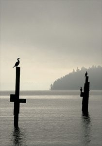 cropped-cormorants-tramp-harbor-.jpg